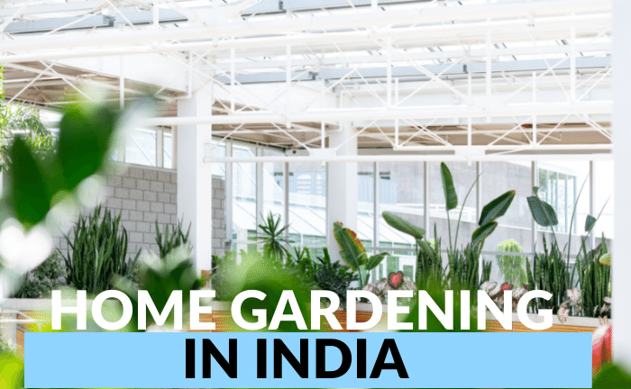 Home Gardening in India